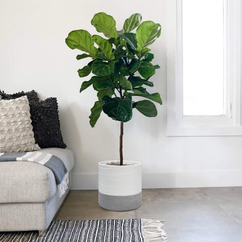 Natural Pot Tree Basket