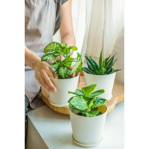 Plastics Planters with Trays