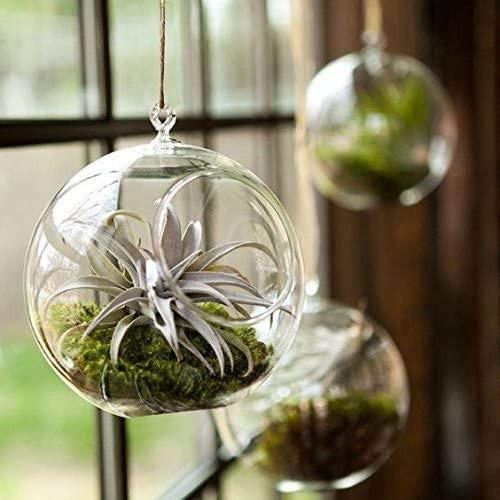 Glass Hanging Planter Terrarium