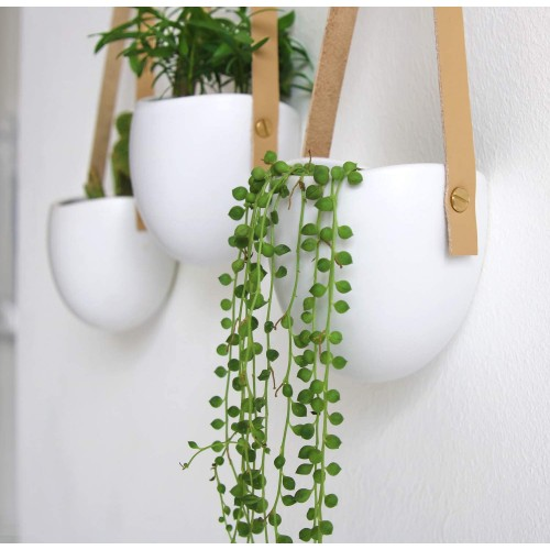 Ceramic Succulent Wall Planters