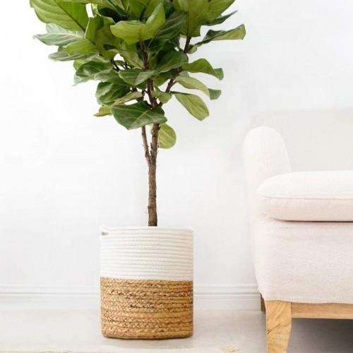 Cotton Water Hyacinth Basket