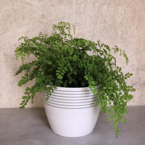 Stripe Pattern Flower Pot