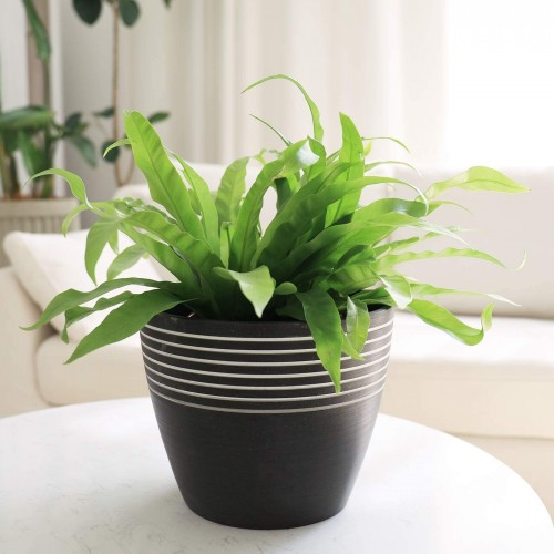 Stripe Pattern Flower Pot