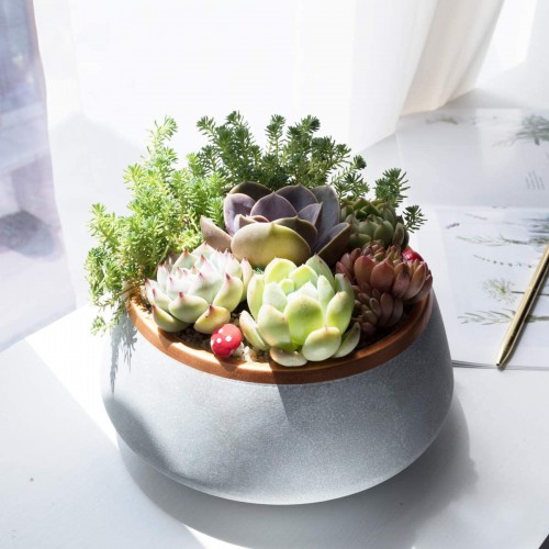 Large Succulent Planter Pot