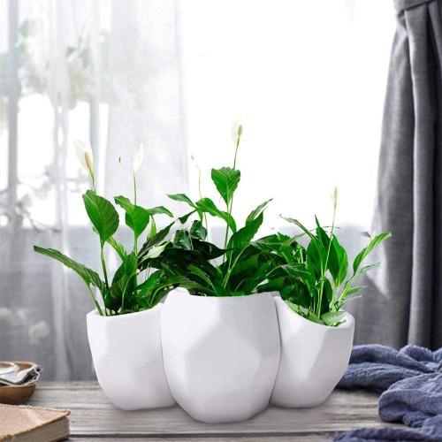 Geometric Succulent Pots Planter
