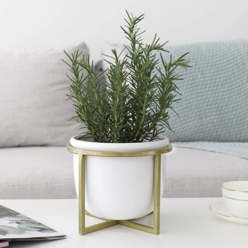 Minimalist Tabletop Plant Pot