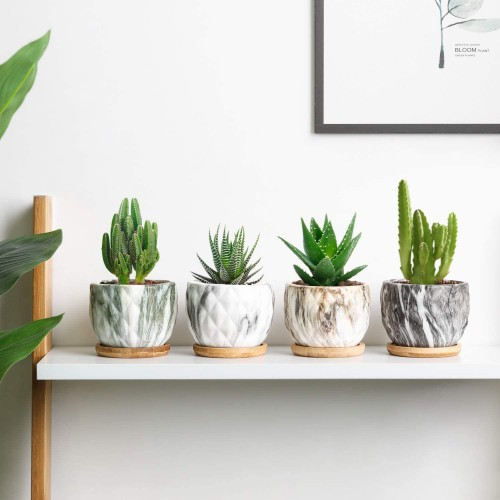 Marbleize Succulent Pots with Tray
