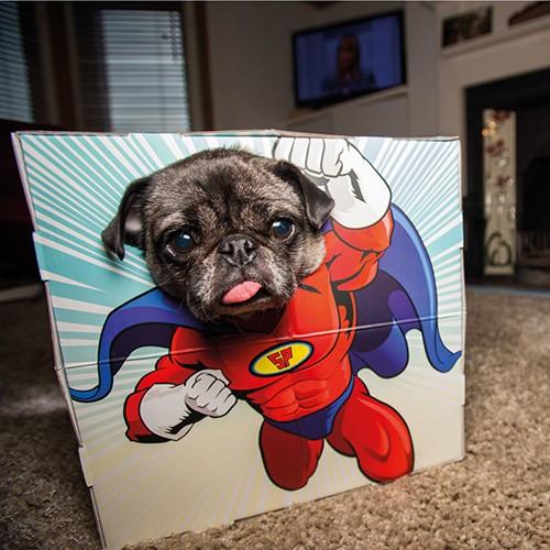 Animal Adventures Pet Photobooth